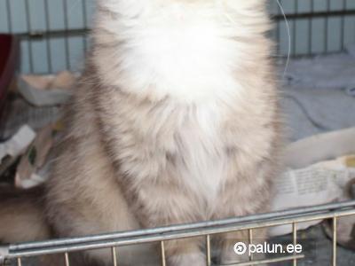 Отдам-Домашние животные-Кошки