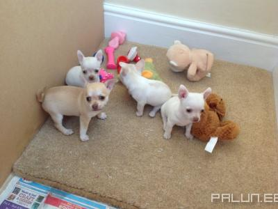 Отдам-Домашние животные-Собаки