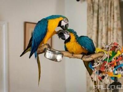 Продаю-Домашние животные-Птицы