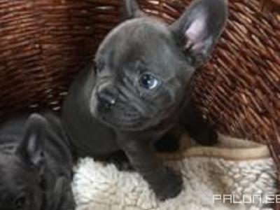 Müüa-Lemmikloomad-Koerad