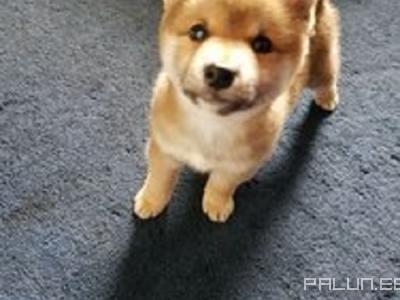 Продаю-Домашние животные-Собаки