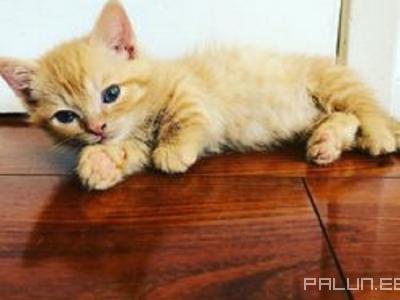 Продаю-Домашние животные-Кошки